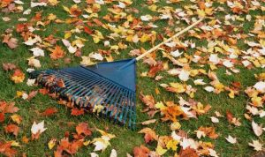 Autumn lawn maintenance